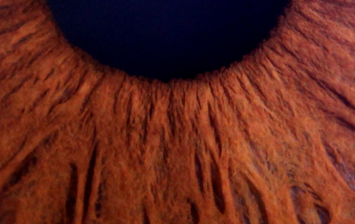 Detail of dark iris captured with the Iris Explorer